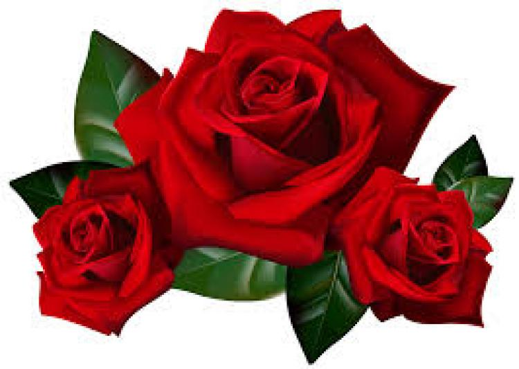 Thoughts Before Wedding Vows (Optional) - red roses